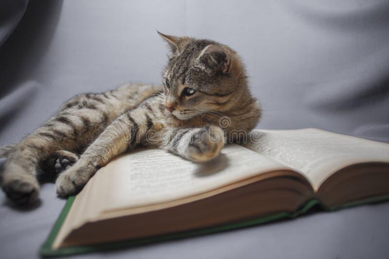 Kat met open boek stock foto's
