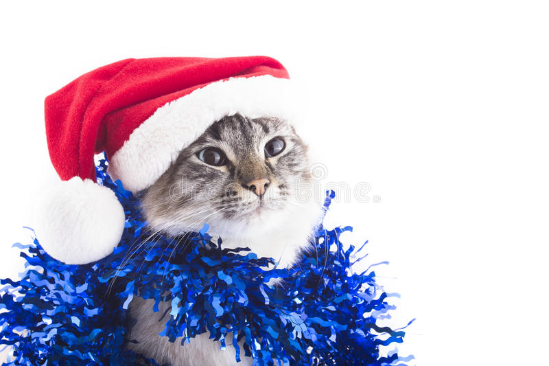 Kat met Santa Claus-hoed en klatergoud op witte achtergrond wordt geïsoleerd die royalty-vrije stock afbeeldingen
