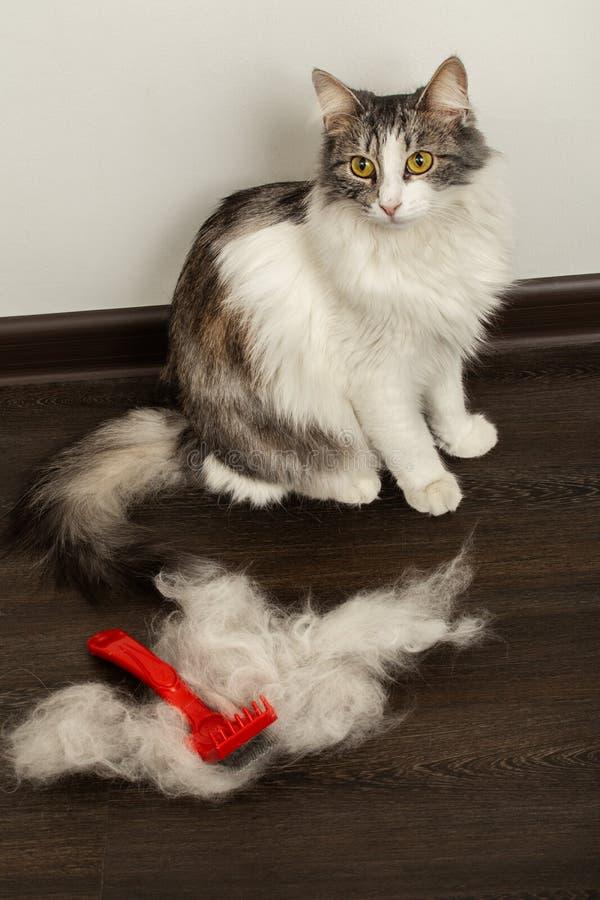 Kat na grooming stock afbeeldingen