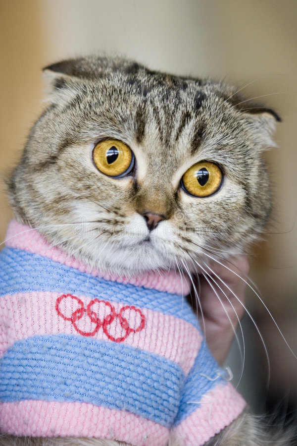 Kat in Olympische kleding stock foto's