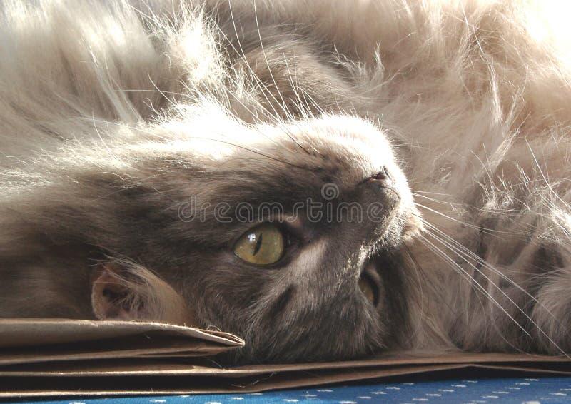 Kat ondersteboven stock afbeelding