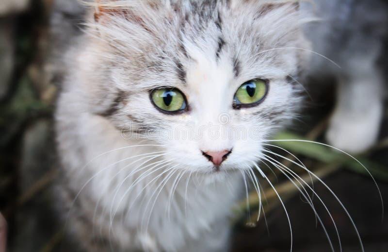 Kat-oog stock afbeelding