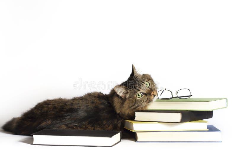 Kat op boeken stock foto