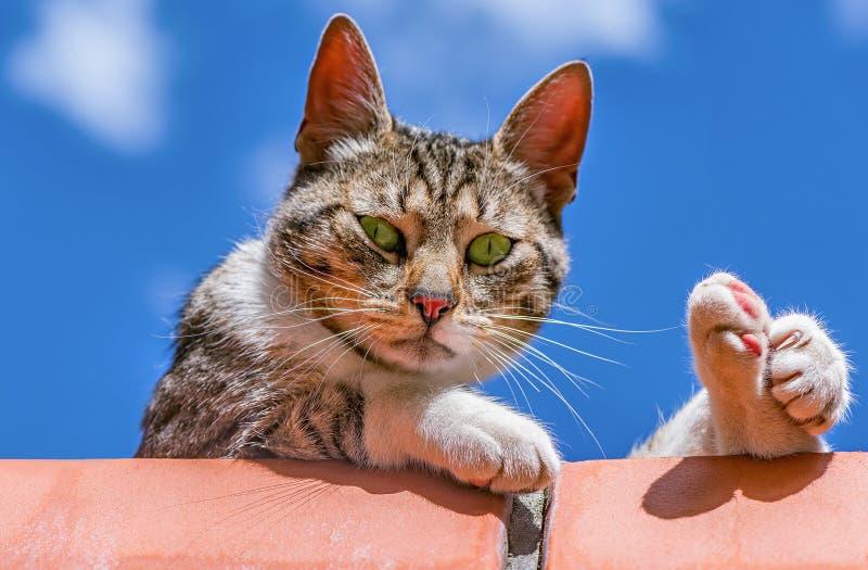 Kat op de baksteenomheining stock fotografie