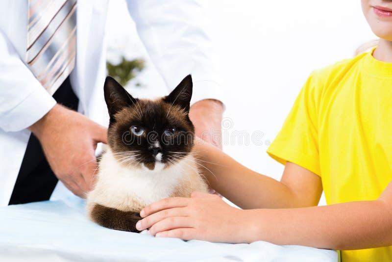 Kat op de behandeling door een dierenarts royalty-vrije stock afbeelding