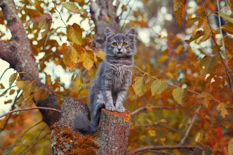 Kat op de boom stock afbeelding