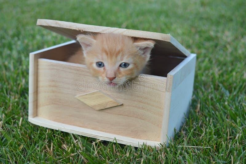 Kat op de doos stock foto