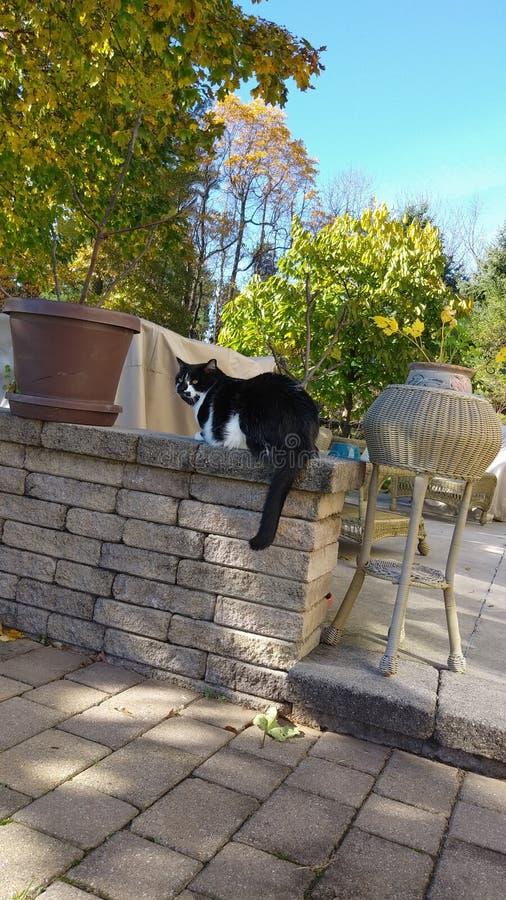 Kat op de richel stock foto