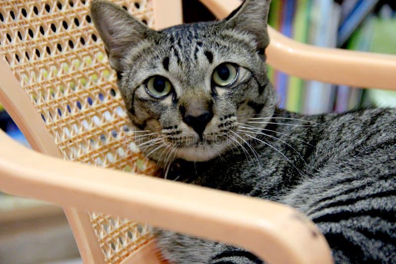 Kat op de stoel stock foto's