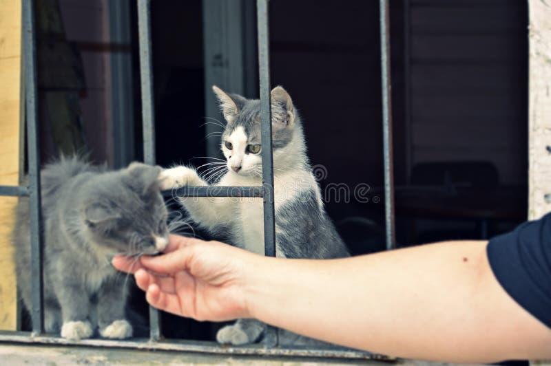 Kat op de vensters royalty-vrije stock fotografie