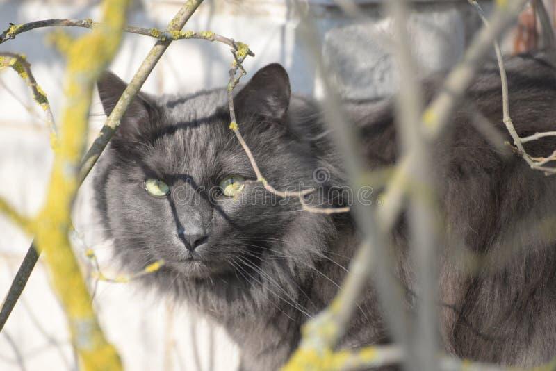 Kat op de venstervensterbank stock foto