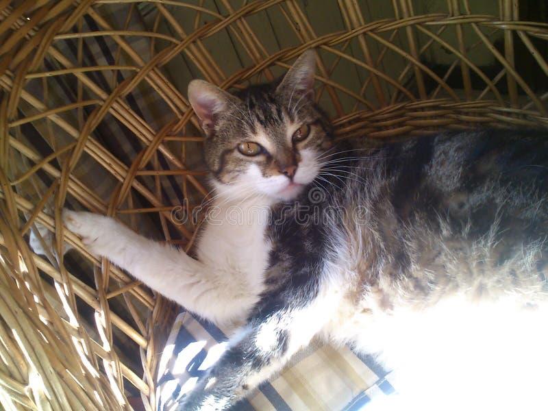 Kat op de zon als rieten voorzitter royalty-vrije stock afbeelding