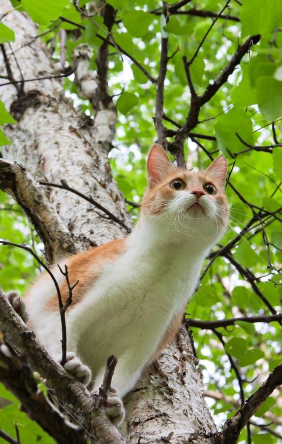 Kat op een boom stock foto