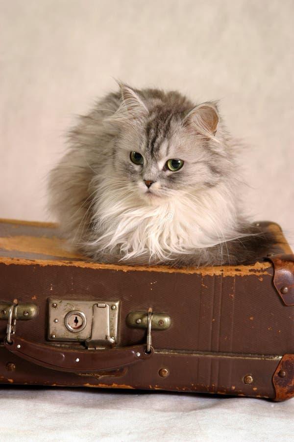 Kat op een koffer - 2 stock afbeelding