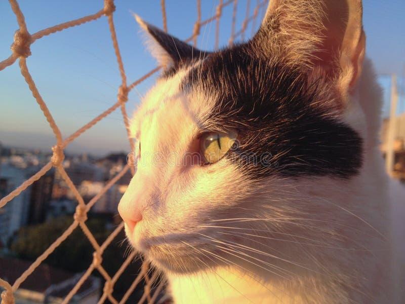 Kat op het balkon bij zonsondergang royalty-vrije stock afbeeldingen
