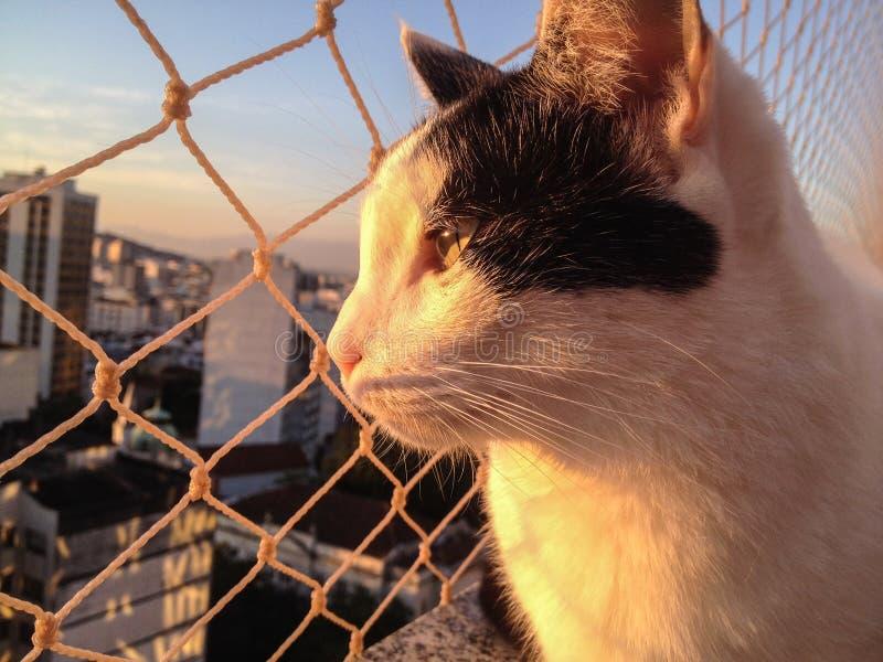 Kat op het balkon bij zonsondergang stock fotografie