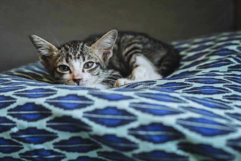 Kat op het blauwe hoofdkussen stock foto