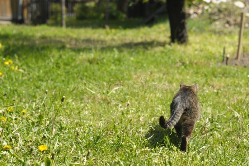 Kat op het gras royalty-vrije stock foto's