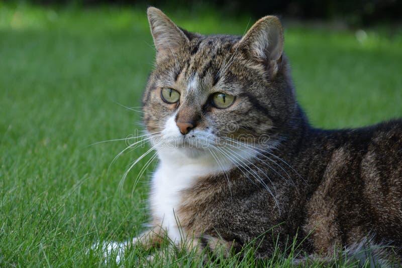 Kat op het gras stock foto's