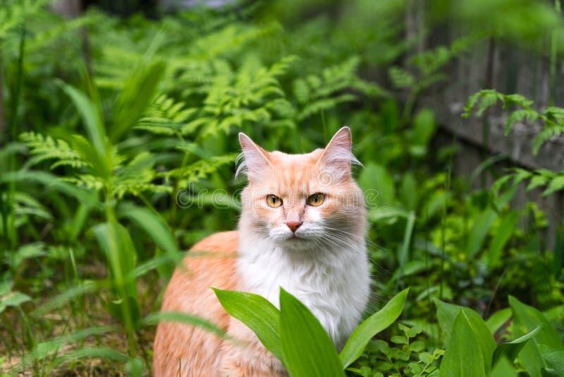 Kat op het gras, kat in het bos stock afbeeldingen