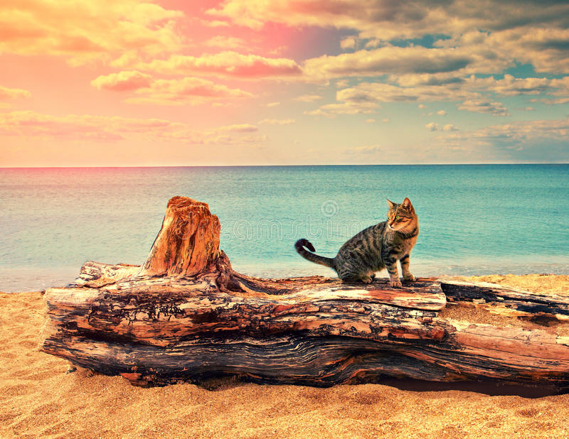 Kat op het strand royalty-vrije stock fotografie