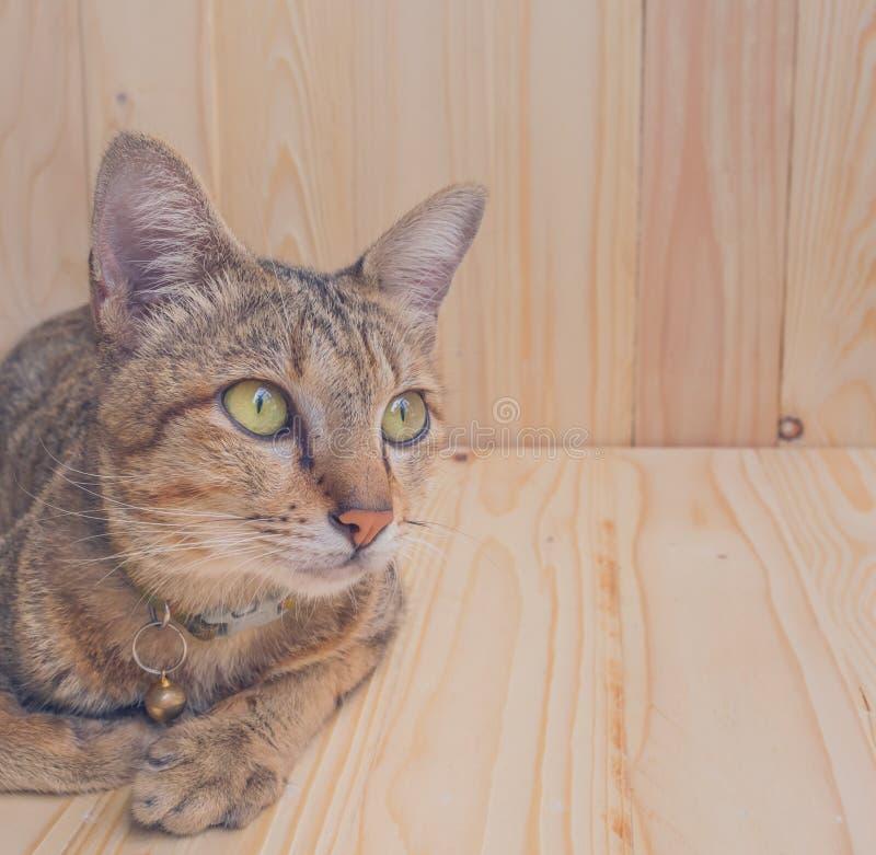 kat op houten achtergrond stock afbeelding