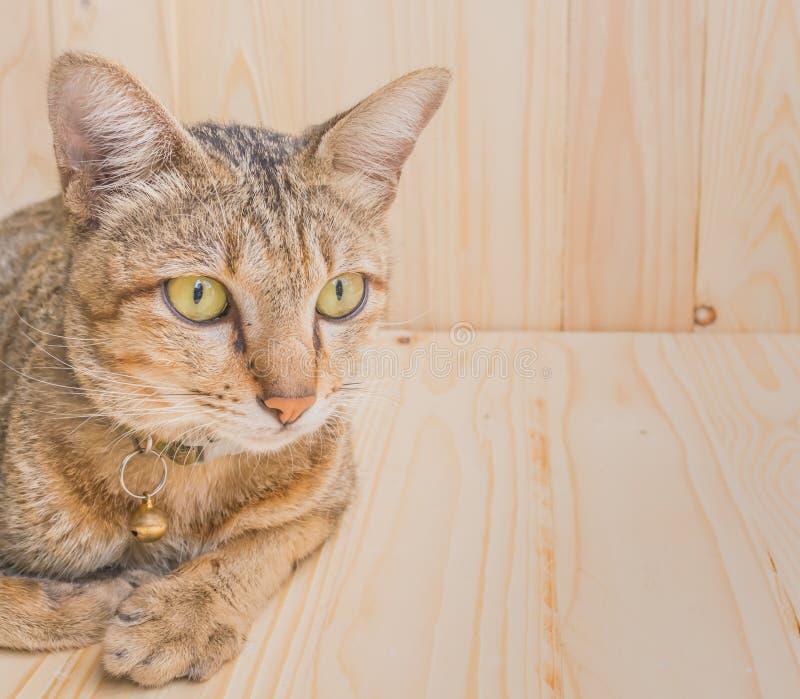 kat op houten achtergrond royalty-vrije stock afbeeldingen