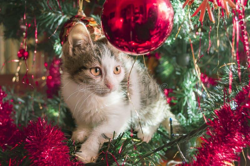 Kat op Kerstbomen royalty-vrije stock afbeelding