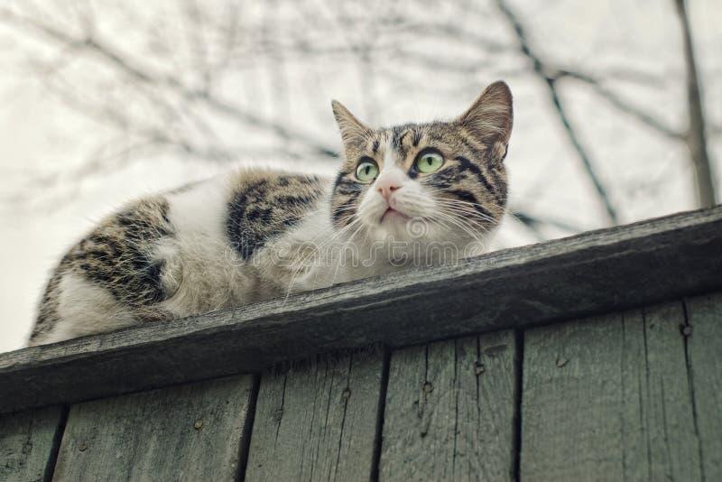 Kat op omheining stock fotografie