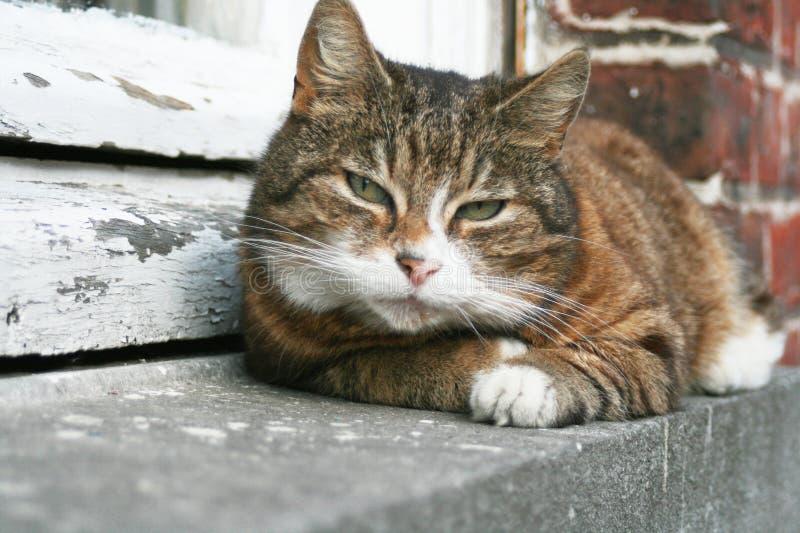 Kat op richel royalty-vrije stock afbeelding