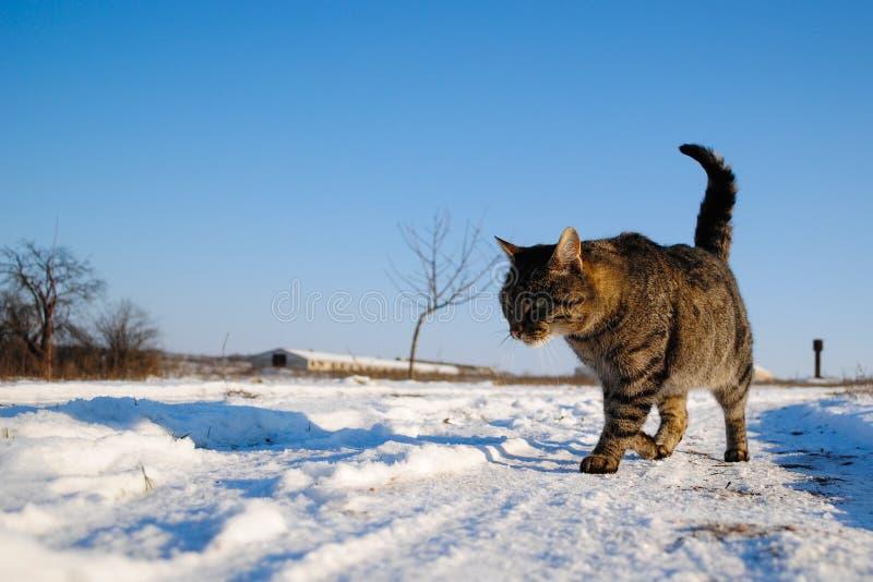 Kat op sneeuw stock afbeelding