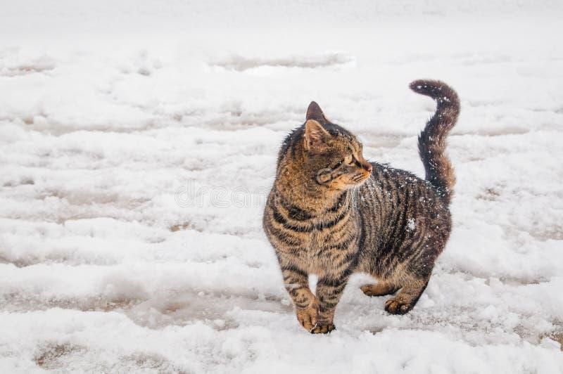 Kat op sneeuw royalty-vrije stock afbeelding