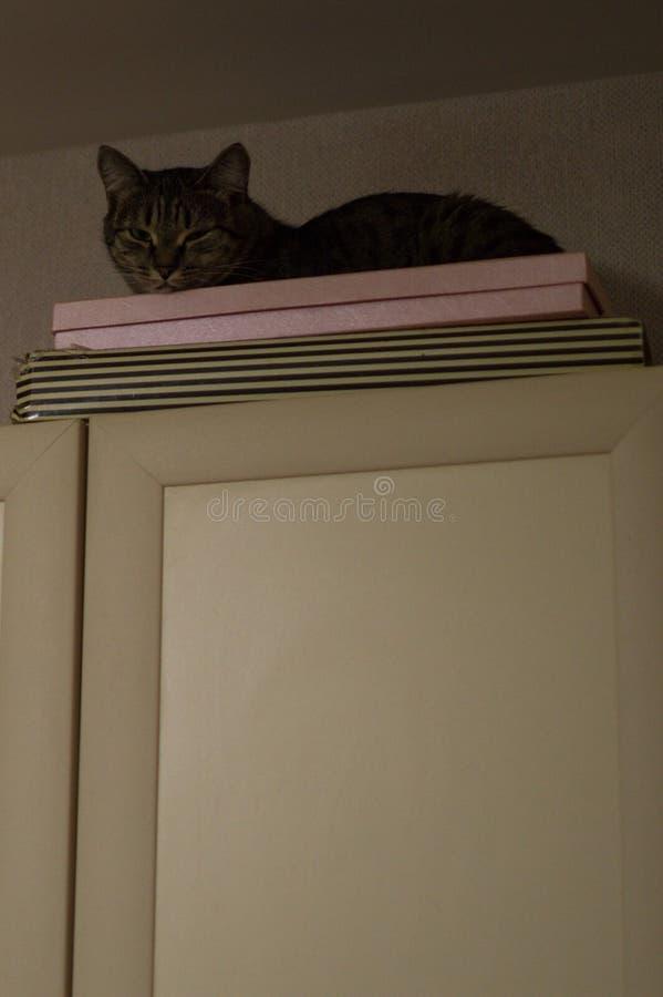 Kat op Top van een Keukenkabinet in Astana, Kazachstan stock fotografie