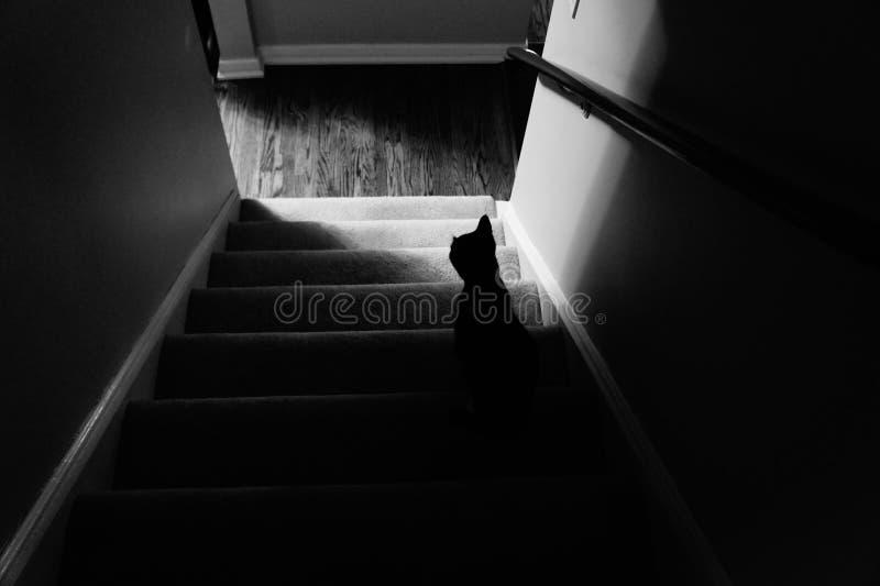 Kat op Treden stock afbeelding