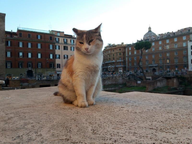 Kat op vierkant Largo di Torre Argentina in Rome royalty-vrije stock afbeelding