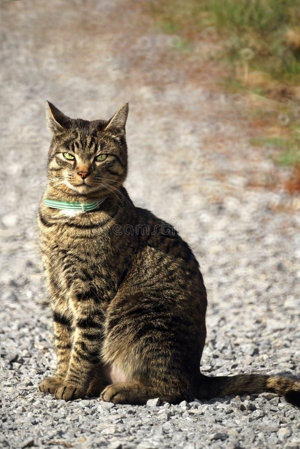 Kat in openlucht royalty-vrije stock fotografie