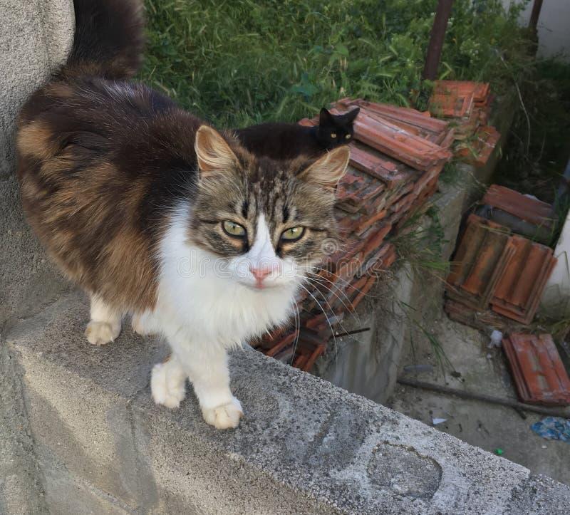 Kat in openlucht royalty-vrije stock foto