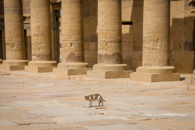 Kat in porticadotoegang tot de tempel gewijd aan godinisis Philae royalty-vrije stock fotografie