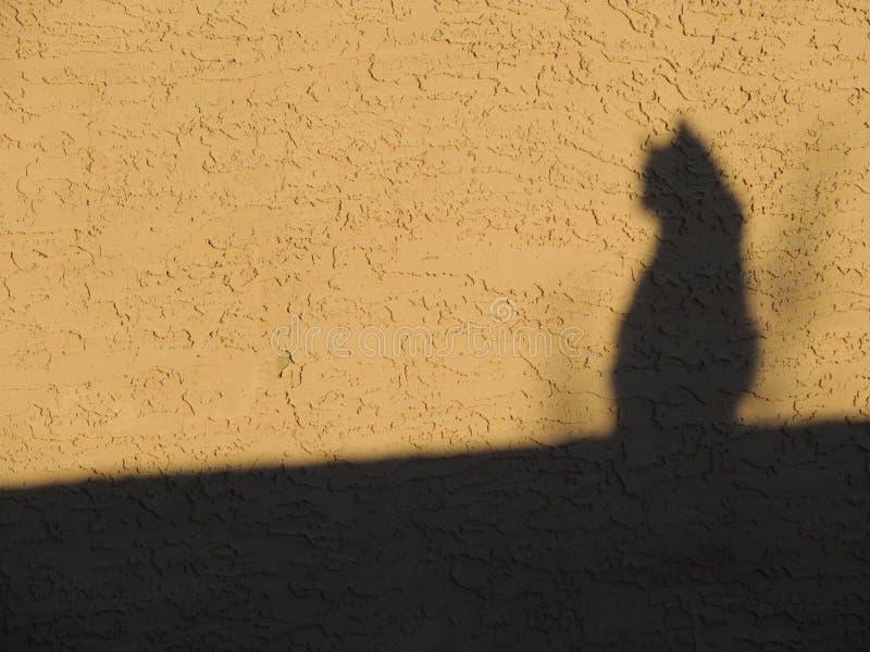 Kat in schaduw royalty-vrije stock foto