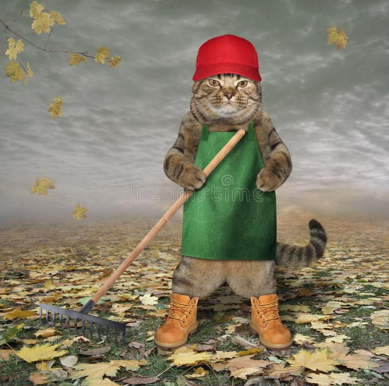 Kat in schort met tuinhark 2 royalty-vrije stock foto