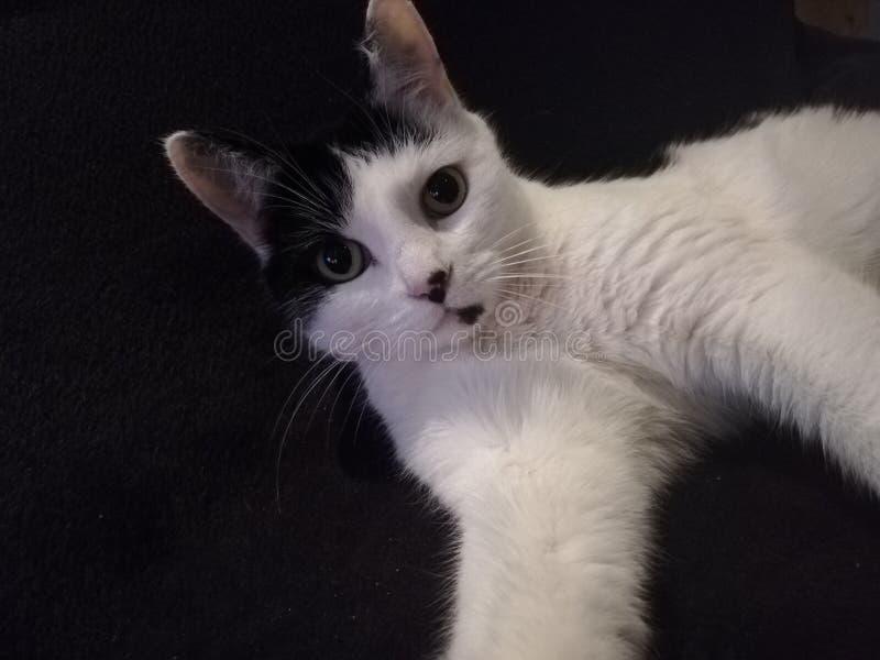Kat selfie stock foto