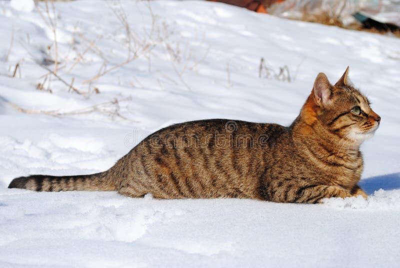 Kat in sneeuw stock foto