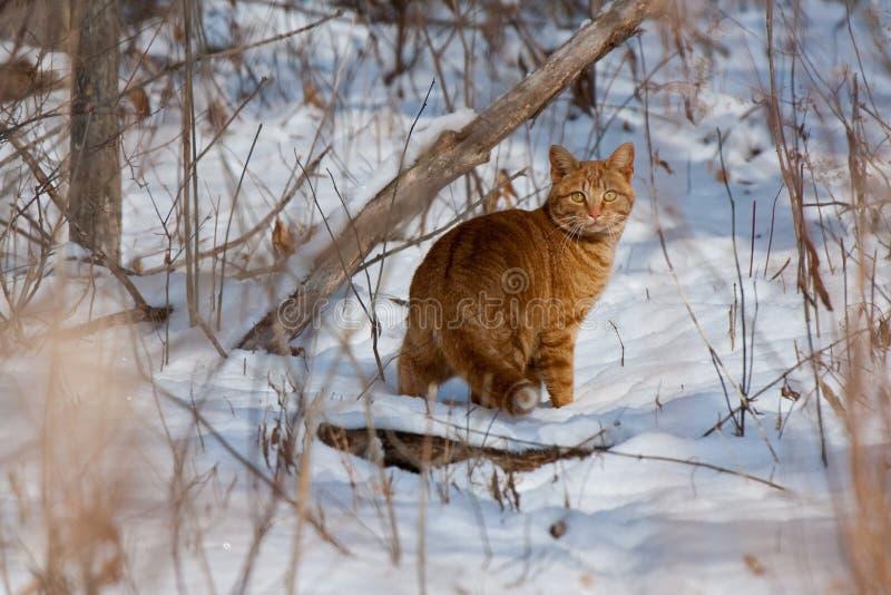 Kat in Sneeuw Behandeld Bos royalty-vrije stock foto