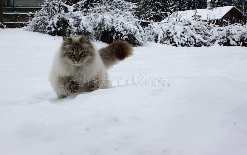 Kat in sprong royalty-vrije stock fotografie