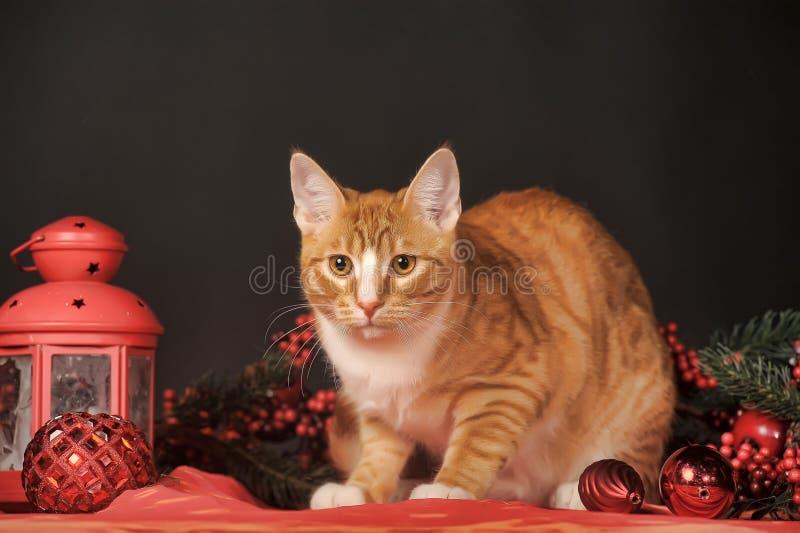 Kat in studio royalty-vrije stock fotografie