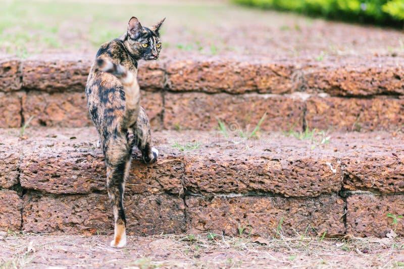 Kat in Thaise tempel stock afbeelding