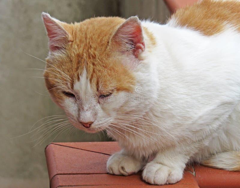 Kat tijdens rust royalty-vrije stock foto's