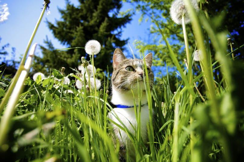 Kat in Tuin royalty-vrije stock foto's