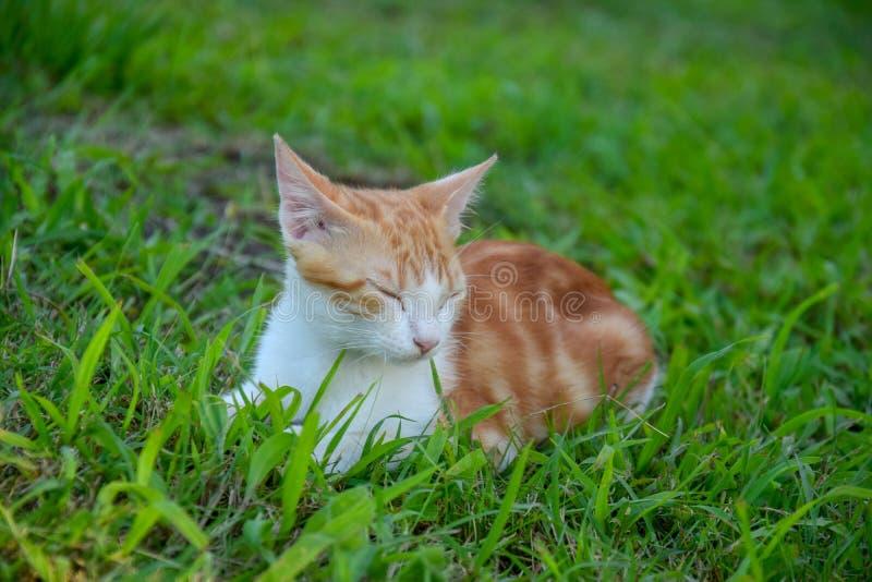 Kat van de baby de rode en witte gestreepte kat stock fotografie