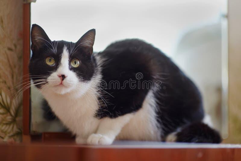 Kat van een zwart-witte kleur royalty-vrije stock afbeeldingen